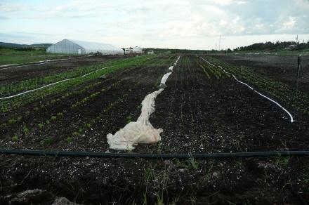 Les verdures poussent doucement