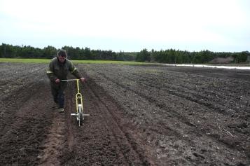 Premier semis de carottes