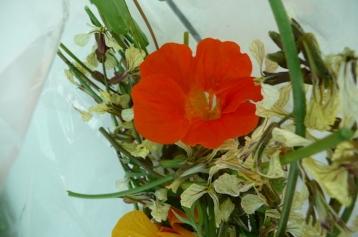 Fleurs de roquette et capucine