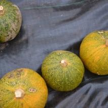 Melonnette